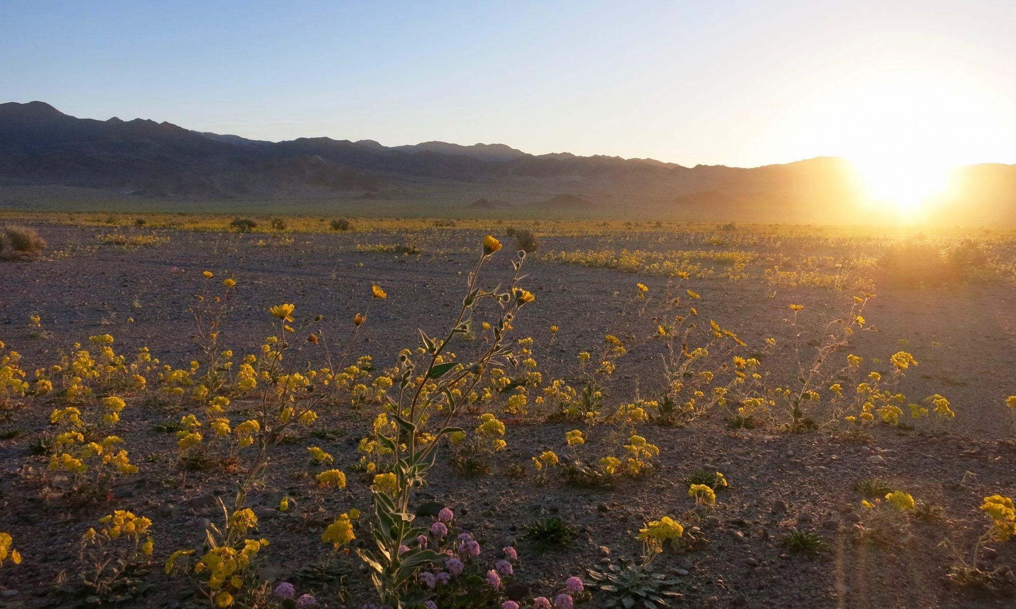 Mojave Grönt